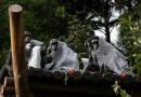 Imagem do Dia: Frio chega ao auge e zoológico distribui cobertor