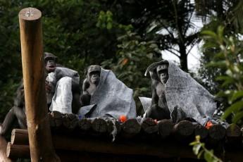 HRZOO SAO PAULO/SP 12/07/2018 - INVERNO ANIMAIS ZOOLÓGICO CIDADES ESPECIAL EMBARGADO - O Zoológico de São Paulo adota diversas ações em relação aos animais durante o inverno. Eles mudam a alimentação de alguns e disponibilizam cobertores para os macacos. Já as girafas ficam num ambiente climatizado com um aparelho de ar-condicionado. FOTO: HÉLVIO ROMERO/ESTADÃO